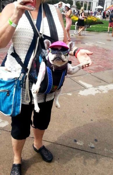 dogs,sunglasses,poorly dressed,hat