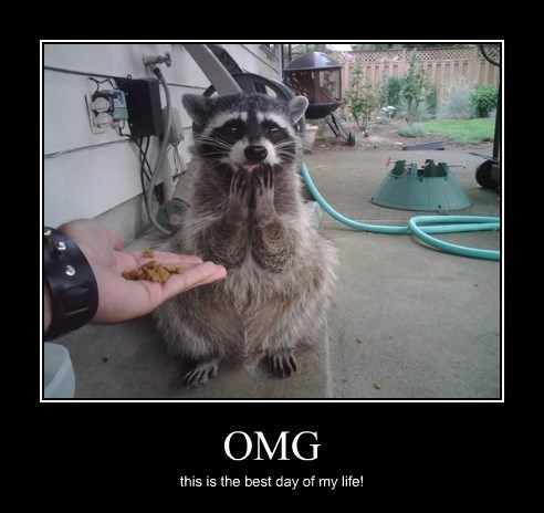 wtf,raccoon,cute,happy,funny