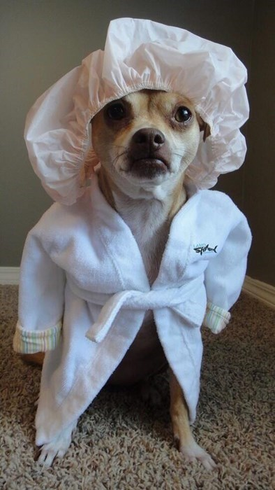 robe,dogs,poorly dressed,shower cap
