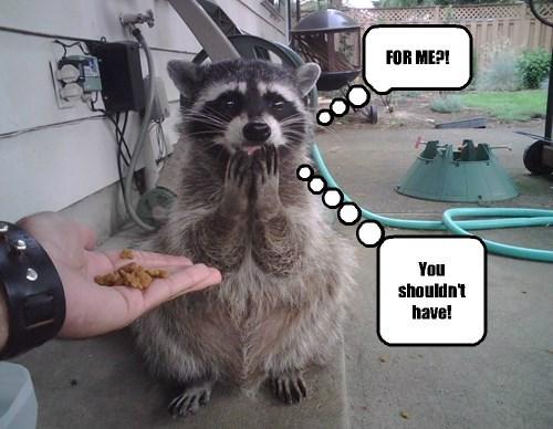 noms raccoons Cats - 8295282432