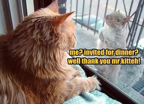 me? invited for dinner? well thank you mr.kitteh!