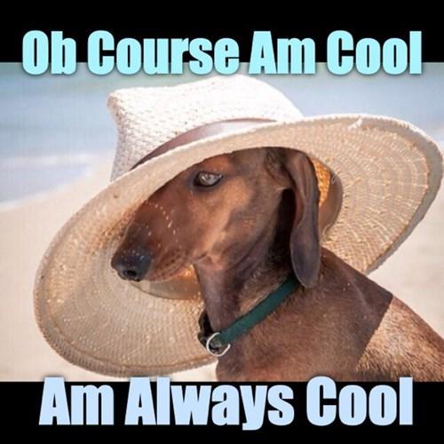 dogs fashion - 8295622656