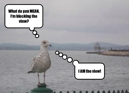 nature seagulls - 8296086272