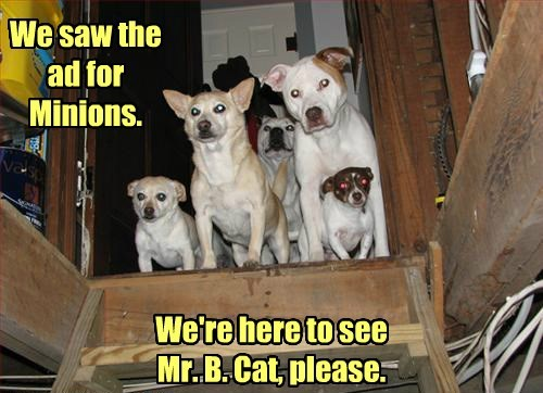 basement cat,minions,dogs