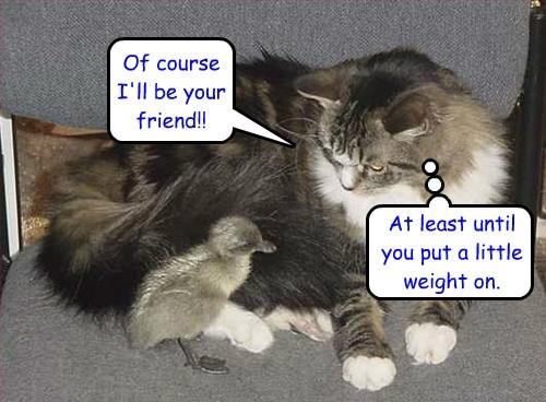 friends ducks noms Cats funny - 8296163840
