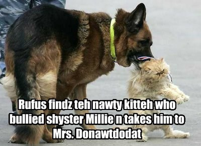 Rufus findz teh nawty kitteh who bullied shyster Millie n takes him to Mrs. Donawtdodat