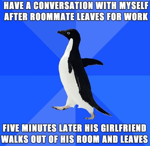 socially awkward penguin - 8296266240