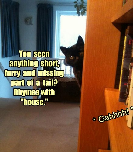"""You  seen  anything  short,  furry  and  missing  part  of  a  tail?  Rhymes with  """"house."""""""