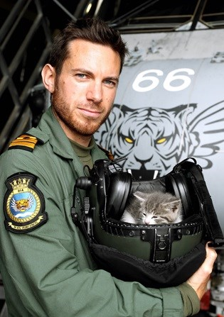 Cats car kitten navy happy ending ride survivor pilot - 829701