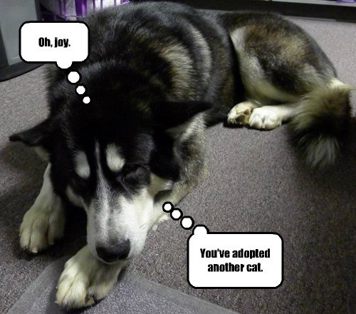 dogs sarcastic bummed funny - 8297598976