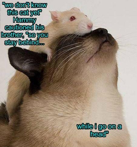 rats Cats funny - 8297792512