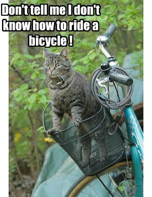 bicycle,hoomins,Cats