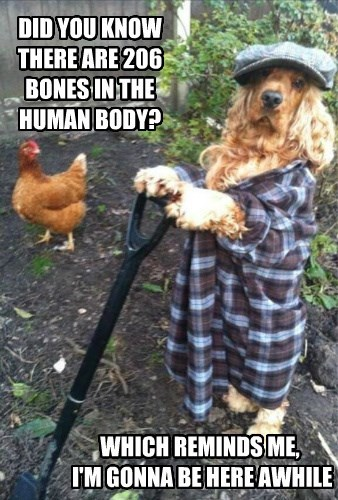 dogs bones creepy digging - 8297923840