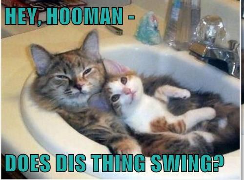 cuddle cute sink Cats - 8298062336