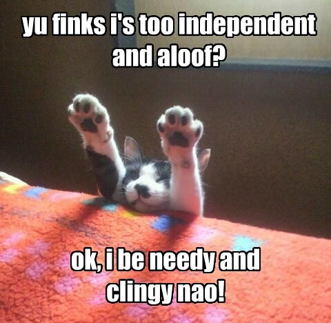 yu finks i's too independent and aloof? ok, i be needy and clingy nao!