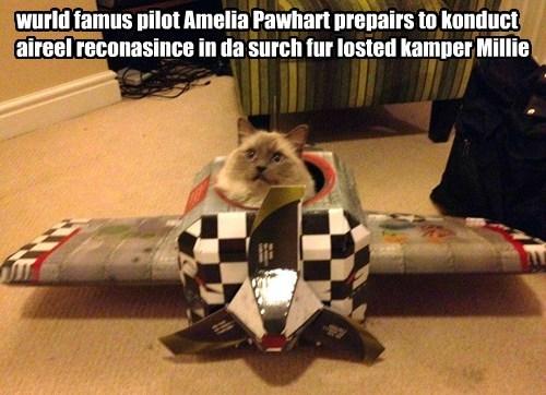 kamp kuppykakes cute Cats funny - 8298198784