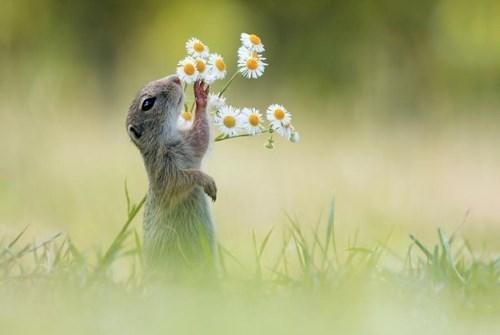 A Daisy for Your Dear