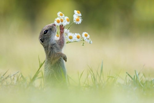 cute flowers - 8298276608