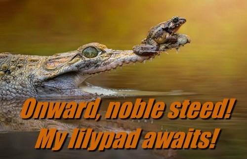 alligators frogs - 8298711296