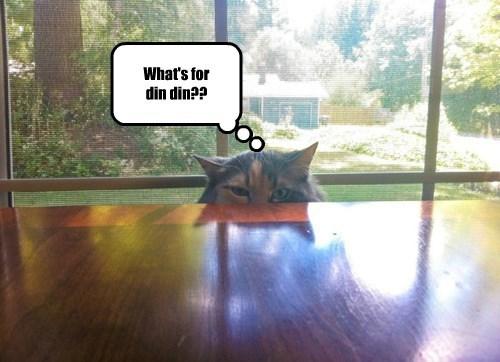 creepy dinner noms Cats - 8298717184