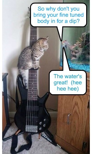 fish Cats funny - 8298726656