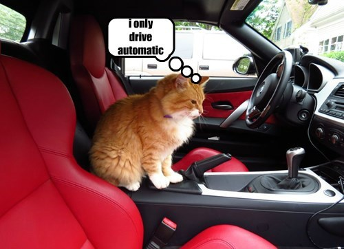 driving Cats - 8298739968