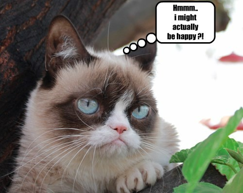 Grumpy Cat,cute,Cats