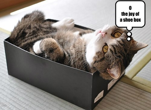 box cute if i fits i sits Cats - 8298745856