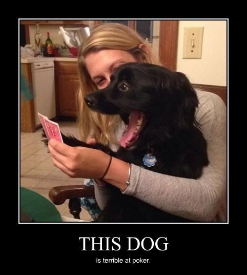 dogs pokerface poker funny