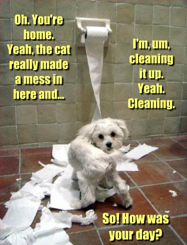 busted cat dogs frame toilet paper - 8298981120