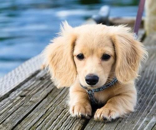 dog gifs,dogs,national dog day,dog days