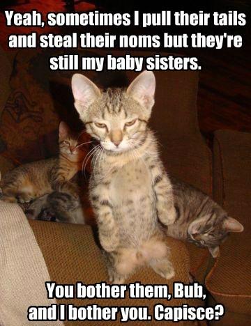 siblings cute Cats - 8299056128