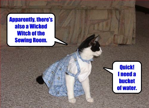 wizard of oz costume Cats - 8299072768
