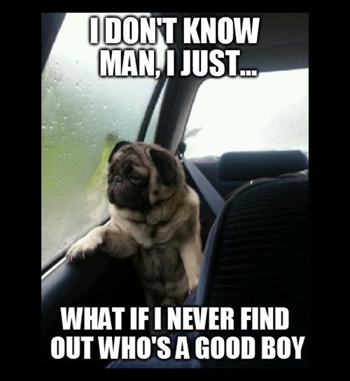 Photo caption - IDON'T KNOW MAN,I JUST... WHAT IFINEVER FIND OUT WHO'S A GOOD BOY