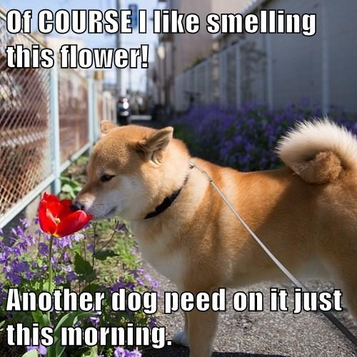dogs pee flowers funny - 8299132672