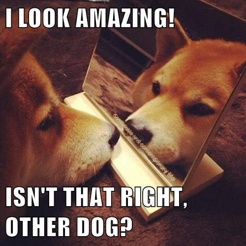 dogs mirrors reflection funny - 8299492352