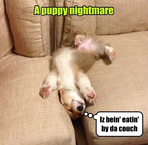puppies couch dreaming - 8299531520