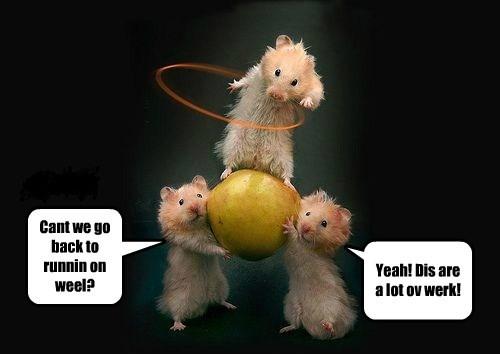 hamsters circus - 8299659264