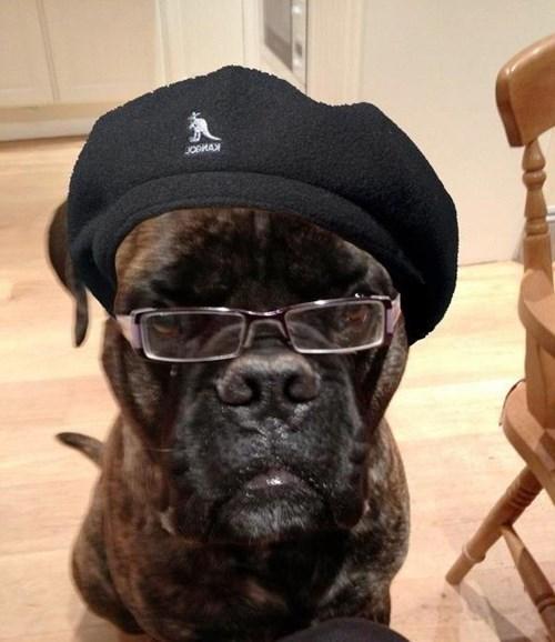 Dog - JOBMAY