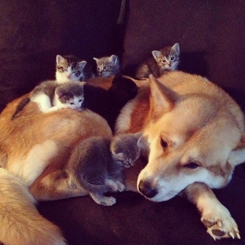 dogs,kitten,friends,cute,Cats