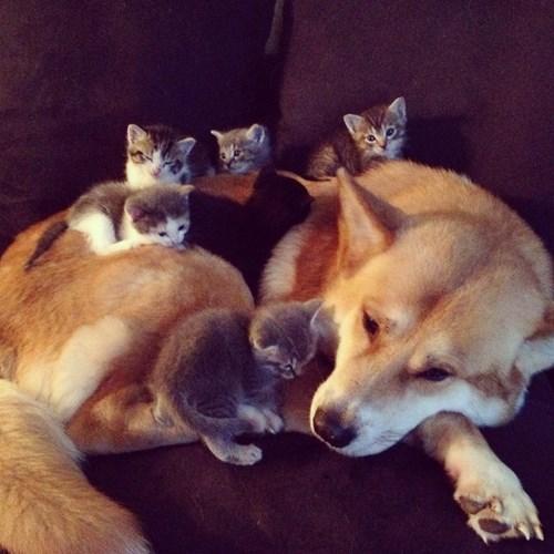 dogs kitten friends cute Cats - 8299801600