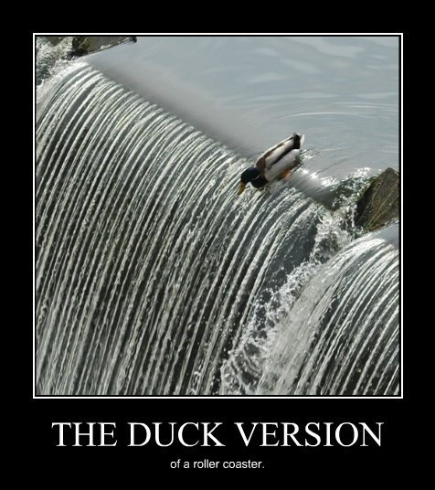 ducks excitement funny roller coaster - 8299843840