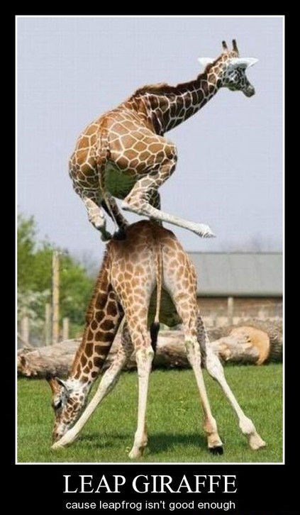 awesome funny giraffes leap frog - 8299845376