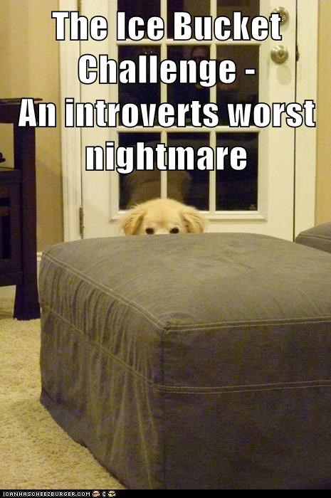 dogs,introvert,ice bucket challenge