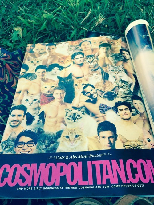 poster,abs,cute,cosmo,magazine,Cats,funny,g rated,dating