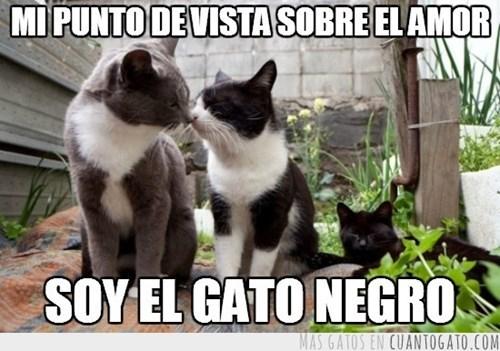 gatos bromas Memes animales - 8299983872
