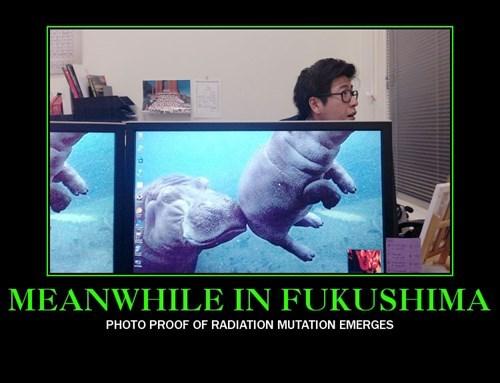 hippos wtf radiation funny - 8300682752