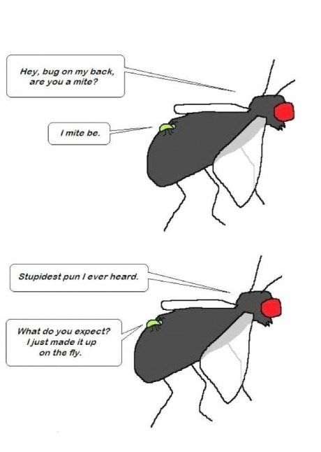 insects,puns,critters,web comics,flies