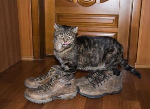 shoes,poorly dressed,Cats