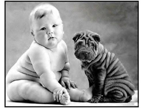 dogs,baby,quiz